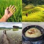 4 images 1 mot 3 lettres niveau riz 2