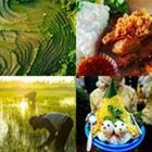 4 images 1 mot 3 lettres niveau riz 3
