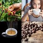 4 images 1 mot 4 lettres niveau cafe 2