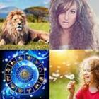 4 images 1 mot 4 lettres niveau lion 2