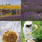 4 images 1 mot 4 lettres niveau miel 1