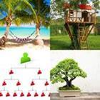 4 images 1 mot 5 lettres niveau arbre 1