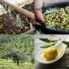 4 images 1 mot 5 lettres niveau olive