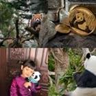 4 images 1 mot 5 lettres niveau panda 1