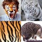 4 images 1 mot 5 lettres niveau tigre 1