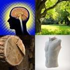 4 images 1 mot 5 lettres niveau tronc 1