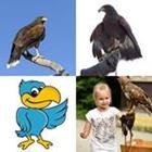 4 images 1 mot 6 lettres niveau faucon 1