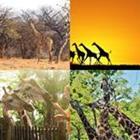 4 images 1 mot 6 lettres niveau girafe 1