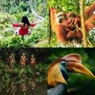 4 images 1 mot 6 lettres niveau jungle 2