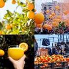 4 images 1 mot 6 lettres niveau orange 1