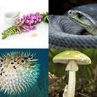 4 images 1 mot 6 lettres niveau poison 1