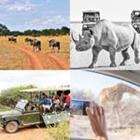 4 images 1 mot 6 lettres niveau safari 1