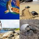 4 images 1 mot 6 lettres niveau tortue 1