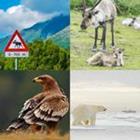 4 images 1 mot 7 lettres niveau animaux 1