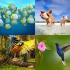4 images 1 mot 7 lettres niveau animaux
