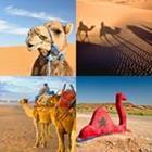 4 images 1 mot 7 lettres niveau chameau 1