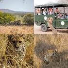 4 images 1 mot 7 lettres niveau guepard 1