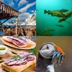 4 images 1 mot 7 lettres niveau poisson 1