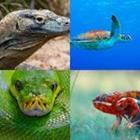 4 images 1 mot 7 lettres niveau reptile 1