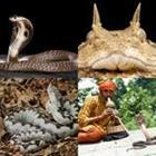 4 images 1 mot 7 lettres niveau serpent 1