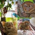 4 images 1 mot 7 lettres niveau tarsier