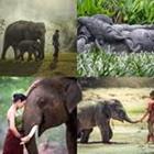 4 images 1 mot 8 lettres niveau elephant 1