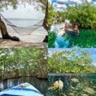 4 images 1 mot 8 lettres niveau mangrove