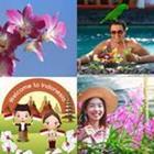4 images 1 mot 8 lettres niveau orchidee