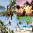 4 images 1 mot 8 lettres niveau palmiers