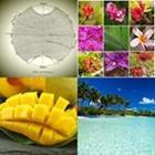 4 images 1 mot 8 lettres niveau tropique 1